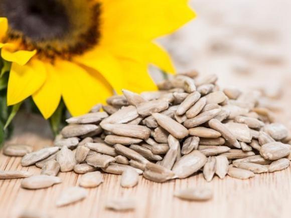 Semi di girasole: proprietà benefiche, calorie e controindicazioni