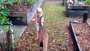 Una bimba si trova faccia a faccia con un cerbiatto: quello che accade lascia tutti basiti!